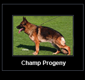 Link to Champ Progeny